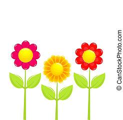 פרחים