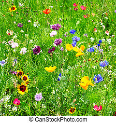 פרחים פראיים