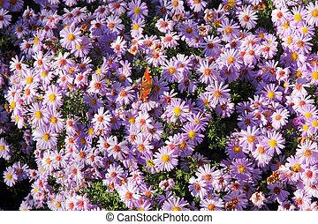 פרחים, פרפר, ורוד