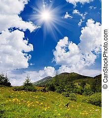 פרחים צהובים, בהרים