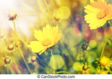 פרחים צהובים, עם, אור שמש, מעל, טבעי, רקע