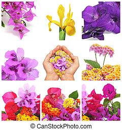 פרחים, קולז'