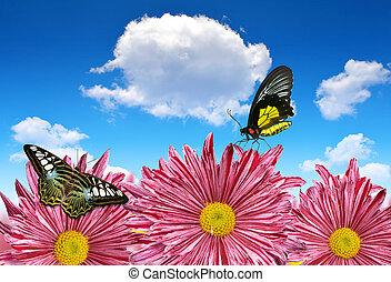 פרחים, קפוץ, פרפרים