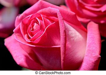 פרחים, 7