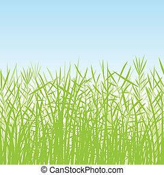 פרט, צמחים, דוגמה, דשא, צלליות, אגמון, רקע, פראי
