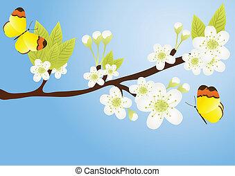 פרפרים, ענף