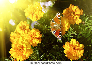 פרפר, פרחים, צהוב