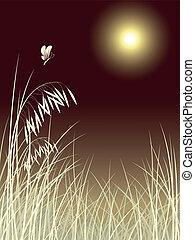 פרפר, תבנית, לילה, דשא, ירח