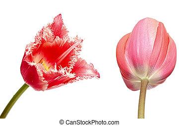 צבעוניים, שני, הפרד, flowers., קפוץ, לבן