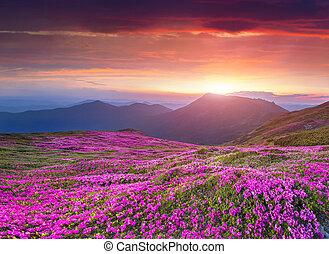 צבעוני, קיץ, עלית שמש, ב, ה, carpathian, הרים