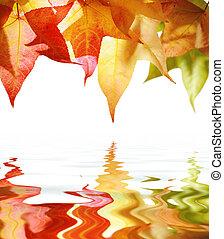 צהוב אדום, סתו עוזב, הפרד, בלבן, השתקף, ב, water.