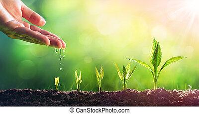צמחים, לגדול, ריווי, צעיר, העבר