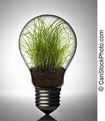 צמח של נורת החשמל, בתוך
