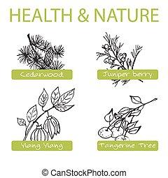 קבע, nature., -, אוסף, דשא, בריאות, תרופה, handdrawn