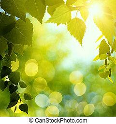 קיץ, יופי טבעי, תקציר, רקעים, מואר, forest., bokeh, אחר הצהריים