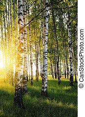 קיץ, יער, עצים, ליבנה