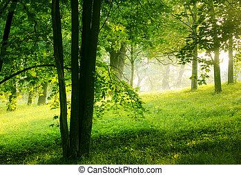 קיץ, יער