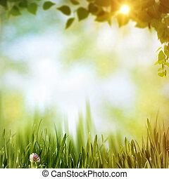 קיץ, יער, תקציר, טבעי, רקעים