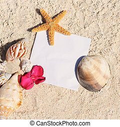 קיץ, כוכב ים, קליפות, נייר של חול, טופס, החף