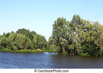 קיץ, נוף של נחל, עצים