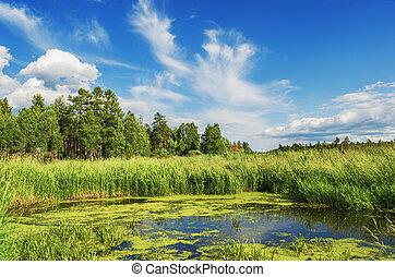קיץ, נוף של נחל