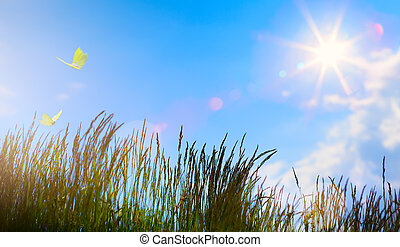 קיץ, פרוח, קיץ, תקציר, -, תחום, רקע