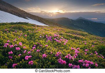 קיץ, פרחים, שקיעה, הרים