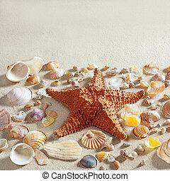 קיץ, צדפה, כוכב ים, קליפות, הרבה, חול, חוף לבן