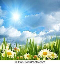 קיץ, קמומיל, אחו, יופי, שמש, מואר, מתחת, פרחים