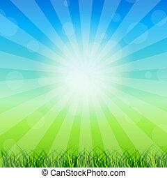 קיץ, תקציר, רקע, עם, דשא, ו, קמומיל, נגד, בהיר, sky., וקטור, illustration.