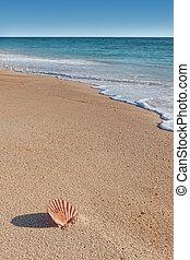 קלוף חוף