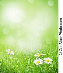 קמומיל, פרחים, ב, דישאה