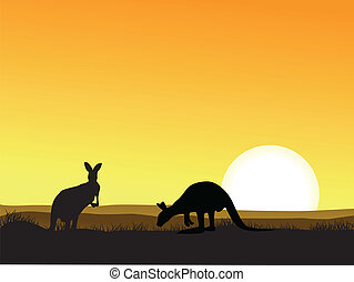 קנגורו, שקיעה, רקע