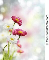 קפוץ פרחים