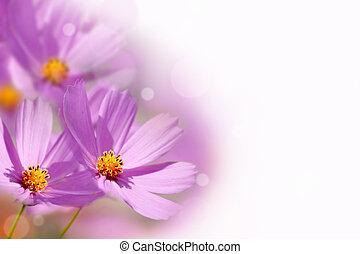 קפוץ פרח