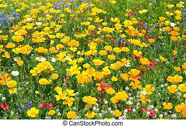 קפוץ, flowers., אחו, צהוב