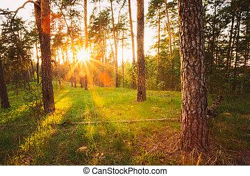 קרנות שמש, שפוך, דרך, עצים, ב, קיץ, יער של סתו, ב, sunset., *r*