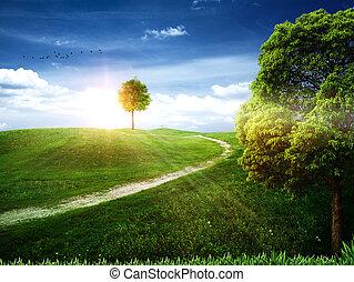 רקעים, טבעי, אומנות, עץ של תפוח העץ