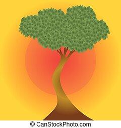 רקע., עץ, שקיעה, אפריקני