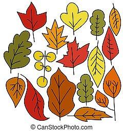 שונה, קבע, סגנן, עצים, סתו, שרבט, תפוז אדום, צבעים, עוזב, סוגים