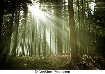 שטח מיוער, קרנות של שמש, ישן, יער