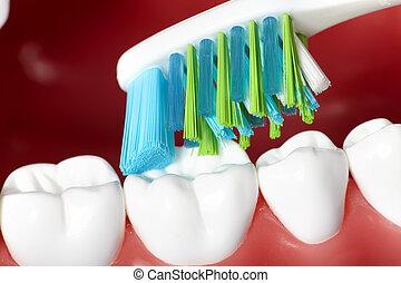 שיניים