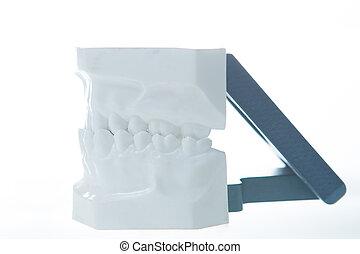 של השיניים, דגמן