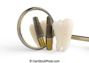 של השיניים, השרש