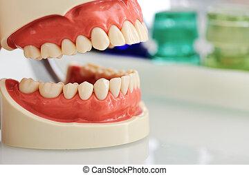 של השיניים, לסת