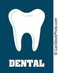 של השיניים, עצב