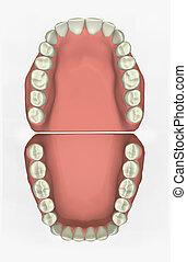 של השיניים, שרטט