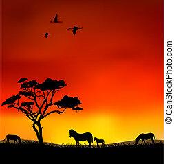 שקיעה, אפריקני