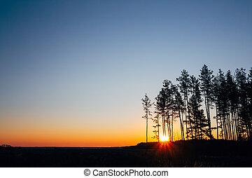 שקיעה, עלית שמש, ב, דאב, forest., מואר, צבעוני, שמיים דרמטיים, ו, חושך, ground.