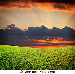 שקיעה, שמש, ו, תחום, של, ירוק, טרי, דשא, מתחת, שמיים כחולים